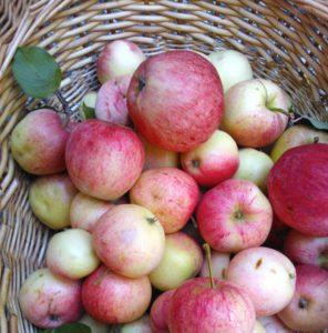 omenakorilahelta